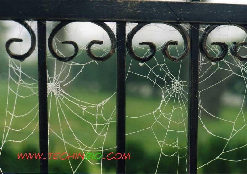 Arredo giardino gazebo pergole tettoie pensiline for Occasioni arredo giardino