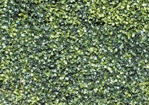 Siepi Da Giardino Prezzi : Siepi finte siepe in plastica siepe artificiale rampicanti